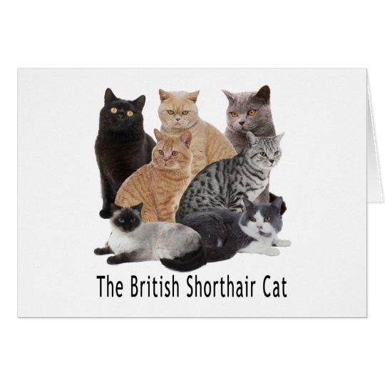 Cat Family British Shorthair Card