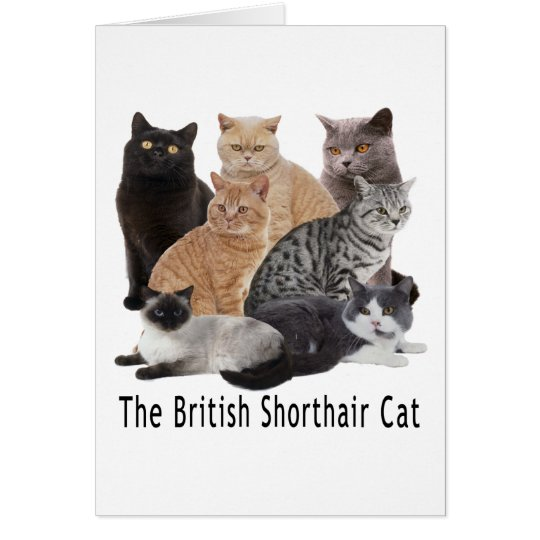 Cat Family British Shorthair Card