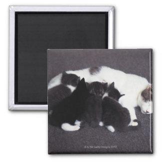cat feeding kitten magnet