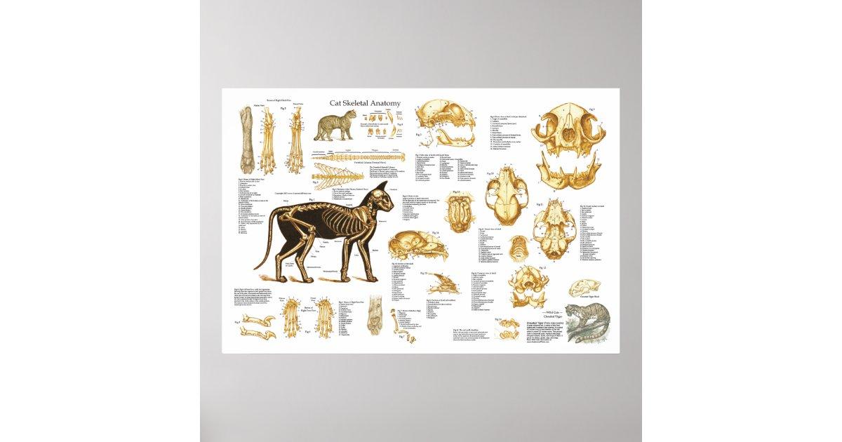 Feline Skeletal Anatomy Choice Image - human body anatomy
