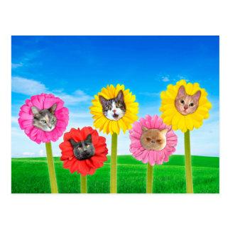 """Cat Flowers"" LOL Funny Postcards"