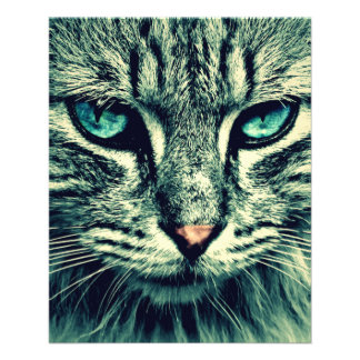 Cat Flyer