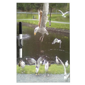 Cat flying a Seagull Dry-Erase Board