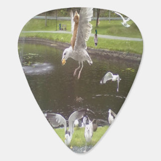 Cat flying a Seagull Guitar Pick