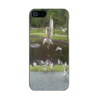 Cat flying a Seagull Incipio Feather® Shine iPhone 5 Case