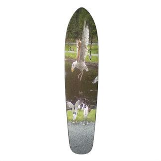 Cat flying a Seagull Skateboard