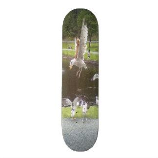 Cat flying a Seagull Skateboard Deck