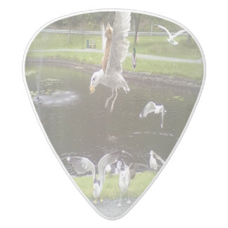 Cat flying a Seagull White Delrin Guitar Pick