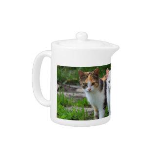 Cat Friends Adventure Teapot
