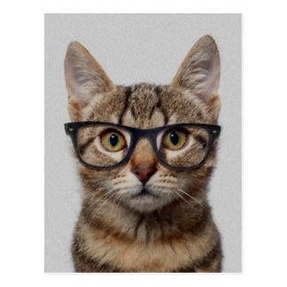 Cat geek postcard