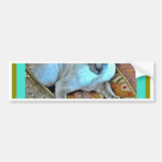 Cat Gifts in Turquoise by Sharles Bumper Stickers