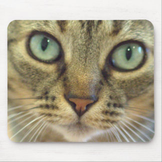 Cat Got Your Mouse? Mouse Pad
