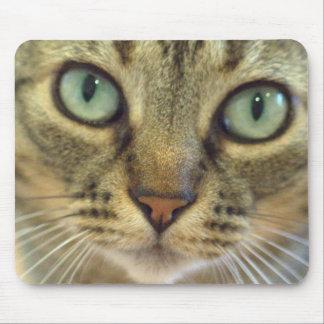 Cat Got Your Mouse? Mousepad