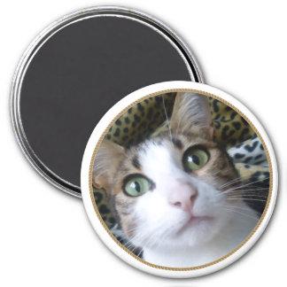 Cat Green Eyes - round magnet Refrigerator Magnet