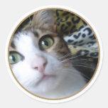 Cat Green Eyes - round sticker