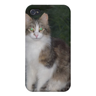 Cat Green Eyes with Firefly iPhone 4/4S Cover