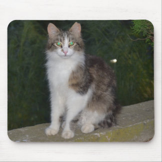 Cat Green Eyes with Firefly Mouse Pad