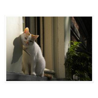 Cat greetingcard postcard