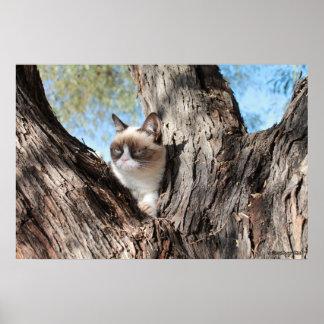 Cat™ gruñón en un poster del árbol