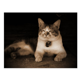Cat Guardian Postcard