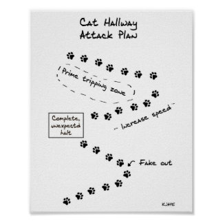 Cat Hallway Attack Plan Poster