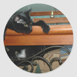 Cat-hangin in there classic round sticker