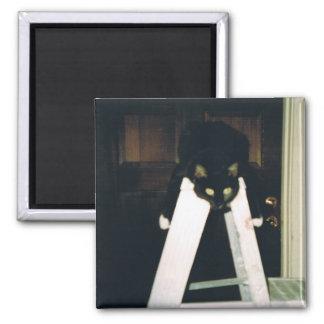 Cat Hanging Around Magnet