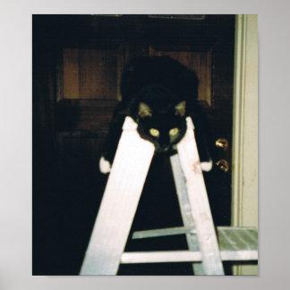 Cat Hanging Around Posters