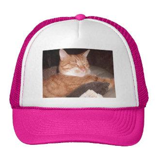 Cat Hat (Danny)