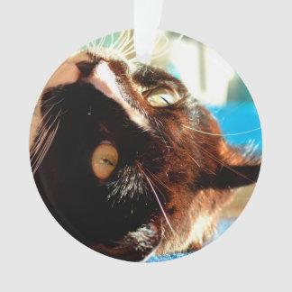 cat head in sunlight neat animal feline image