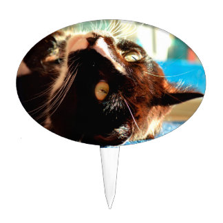 cat head in sunlight neat animal feline image cake picks
