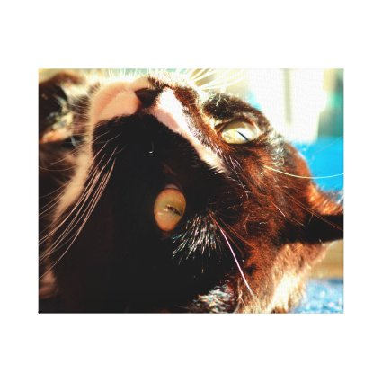 cat head in sunlight neat animal feline image stretched canvas print