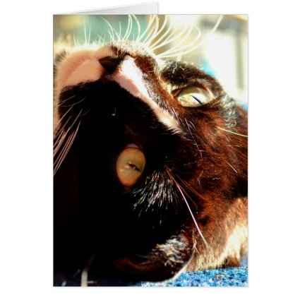 cat head in sunlight neat animal feline image greeting cards