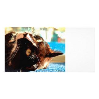 cat head in sunlight neat animal feline image custom photo card