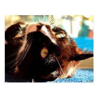 cat head in sunlight neat animal feline image postcard