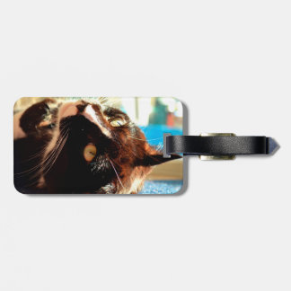 cat head in sunlight neat animal feline image tag for luggage