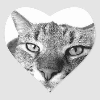 cat heart sticker