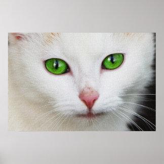 CAT HERMOSO POSTER