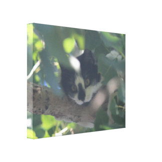Cat Hiding in a Tree Canvas Print