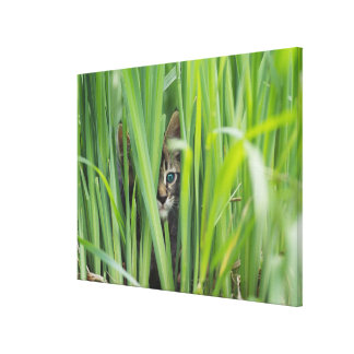 Cat hiding in grass canvas print