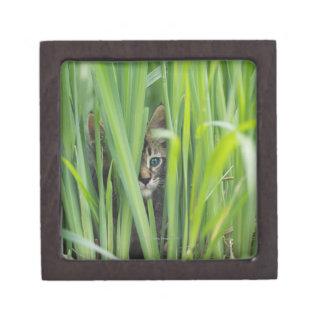 Cat hiding in grass premium gift box