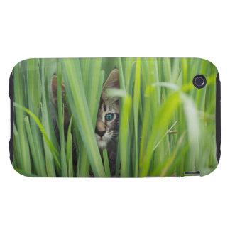 Cat hiding in grass tough iPhone 3 case