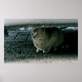 Cat Hiding Print