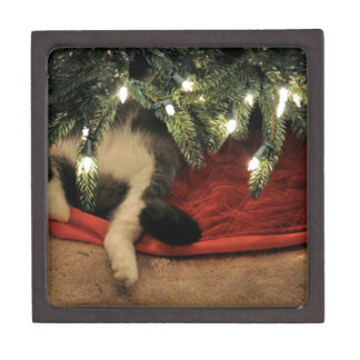 Cat Hiding Under Christmas Tree Jewelry Box