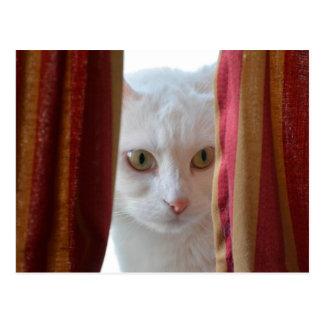 Cat Holly ** Postcard