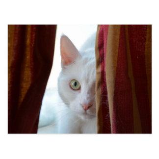 Cat Holly * Postcard