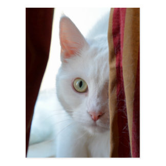 Cat Holly *** Postcard