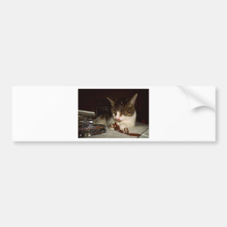 Cat Hungry For Cassettes Bumper Sticker