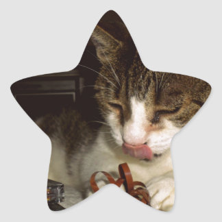 Cat Hungry For Cassettes Star Sticker