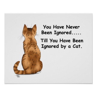 Cat Ignoring You Poster